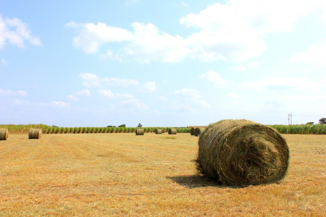 多良間島 牧草ロール
