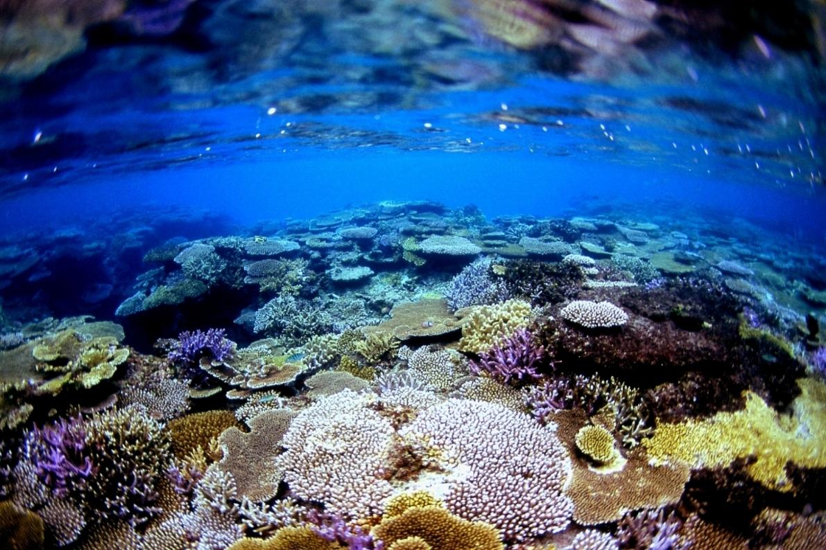 波照間島水中写真